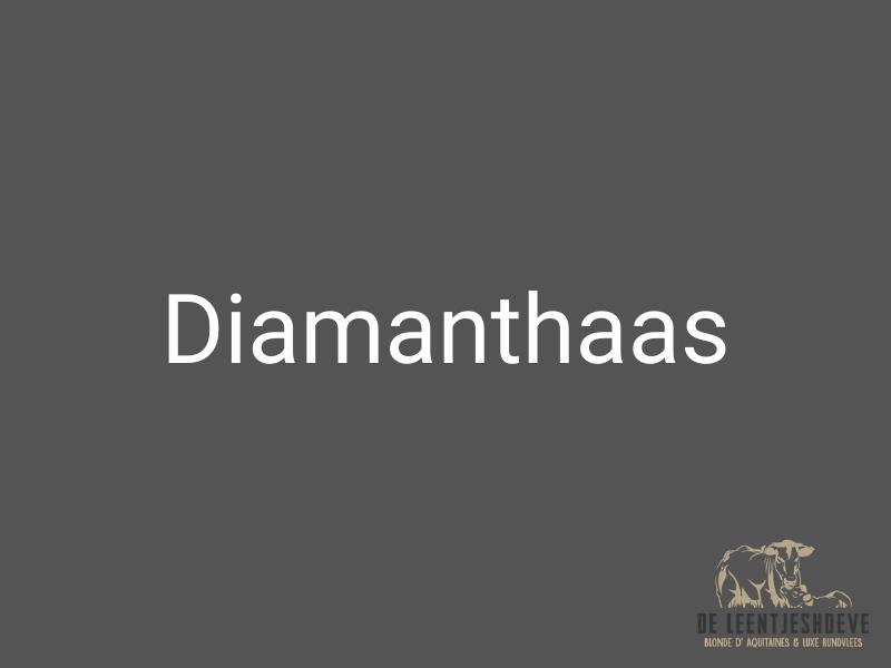 diamanthaas - jodenhaas - schouderhaas