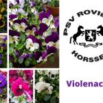 violenactie PSV Rovienna