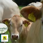 beter leven 2 sterren rund de leentjeshoeve natuurvlees nederland